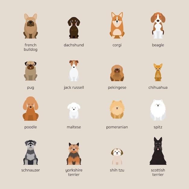 Набор пород собак, маленький и средний размер, вид спереди Premium векторы