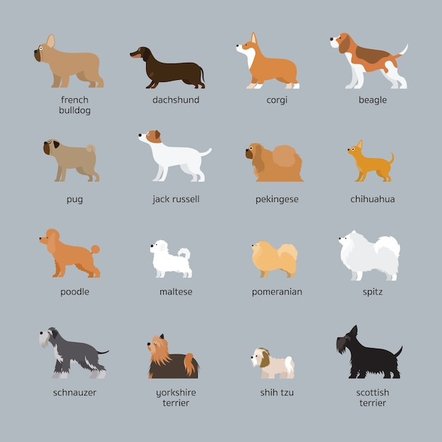 Dog breeds set, small and medium size, side view Premium Vector