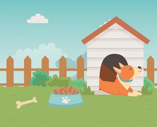 Dog cartoon design vector illustrator Free Vector