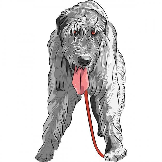 Dog irish wolfhound breed Premium Vector cães gigantes
