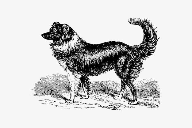 Dog vintage drawing Free Vector