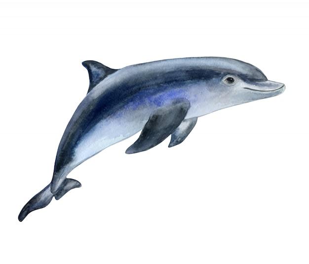 Dolphin in watercolor Premium Vector