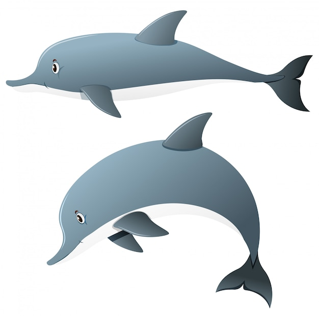 Dolphins in two actions Free Vector