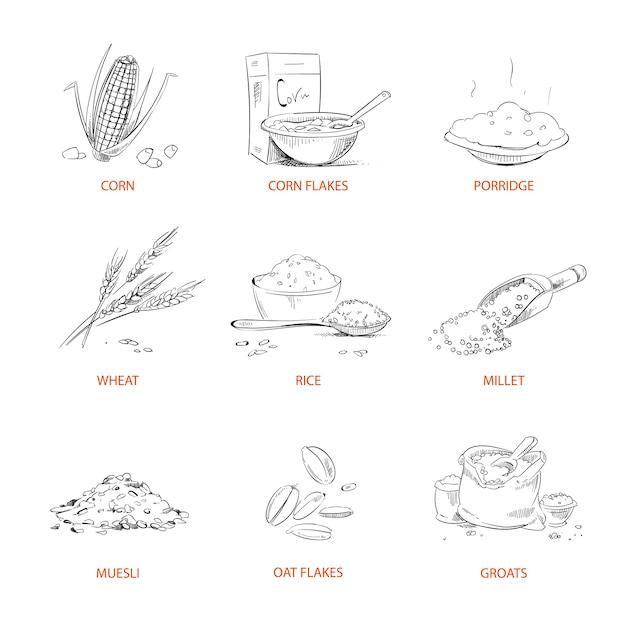 Doodle cereals groats Premium Vector