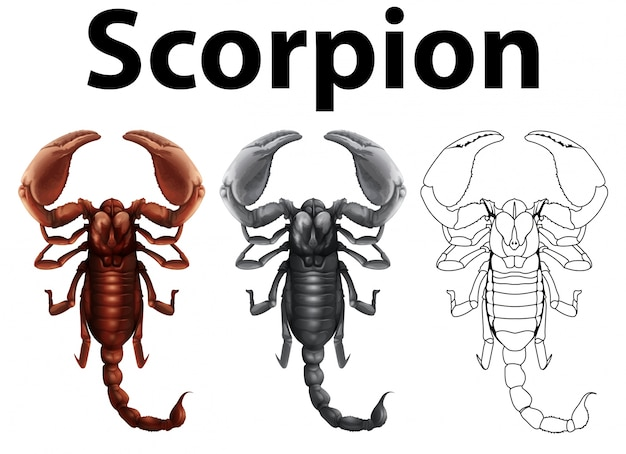 Doodle character for scorpion illustration Free Vector