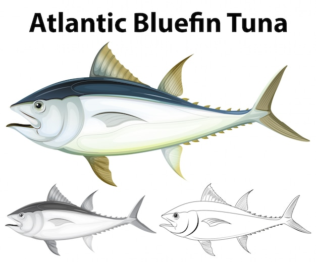 Drafting character for atlantic bluefin tuna illustration Free Vector