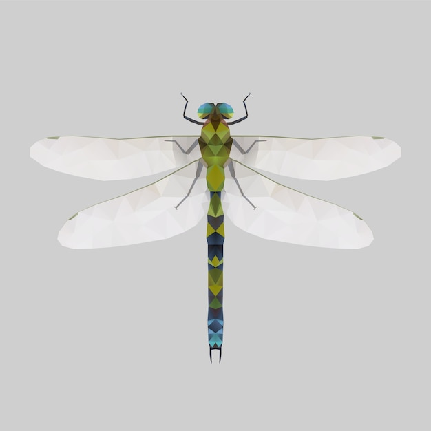 Dragonfly, low poly illustration Premium Vector