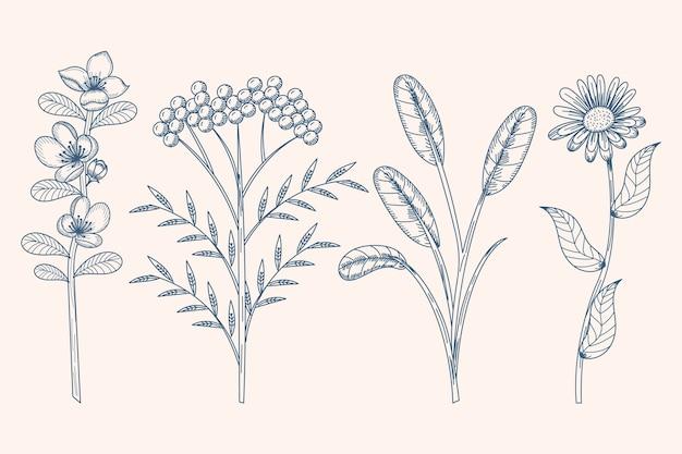 Рисовать с травами и полевыми цветами Бесплатные векторы