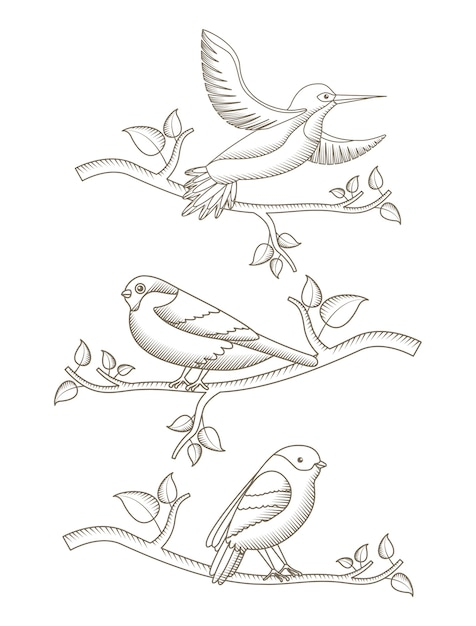 Drawing Birds In Branch Tree Natural Decoration Vector
