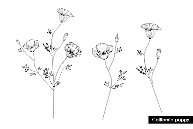 Drawing california poppy flowers vector premium download drawing california poppy flowers premium vector mightylinksfo