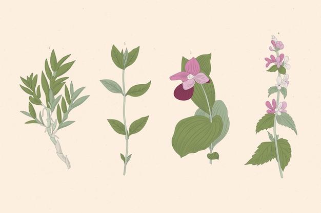 Рисование трав и полевых цветов Бесплатные векторы