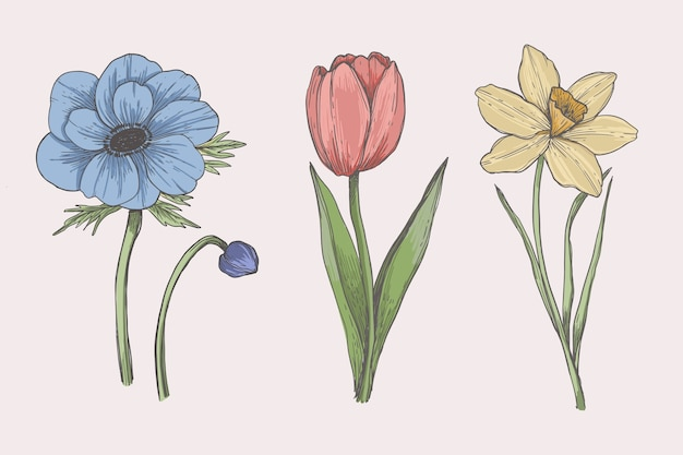 Drawing with vintage botany flower collection Free Vector