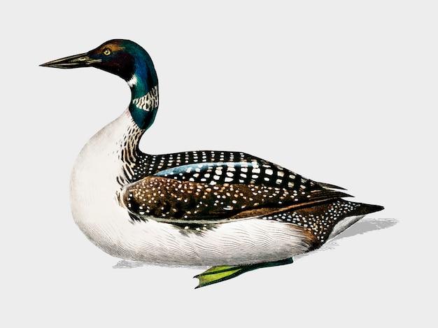 Duck Free Vector