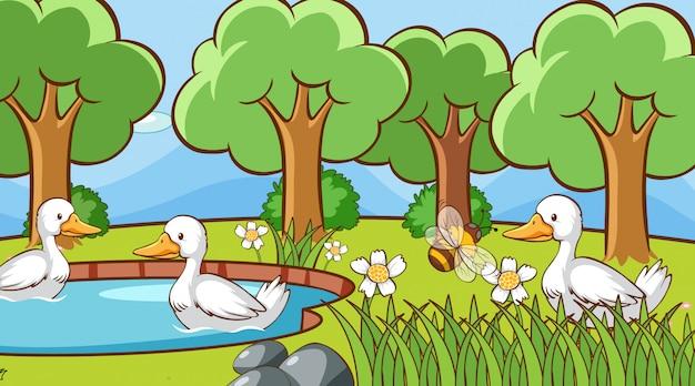 Anatre nel parco Vettore gratuito