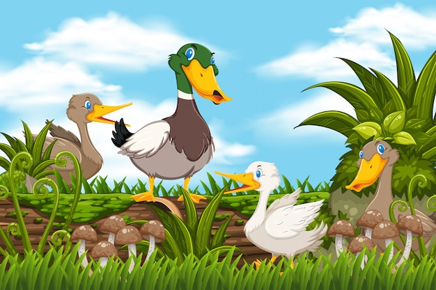 Ducks in woods scene Premium Vector