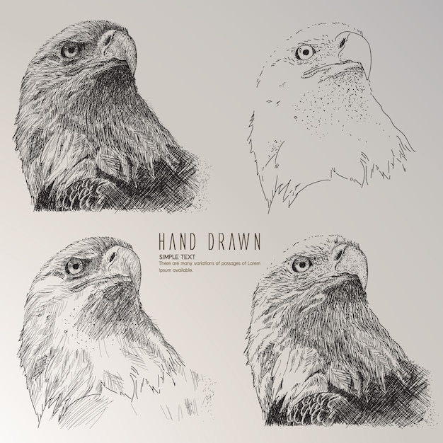 Eagle head hand drawn collection Free Vector