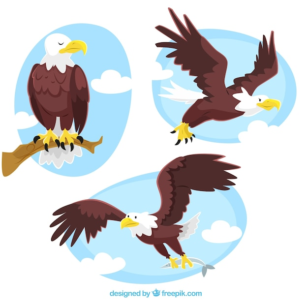 Eagle illustrations Free Vector
