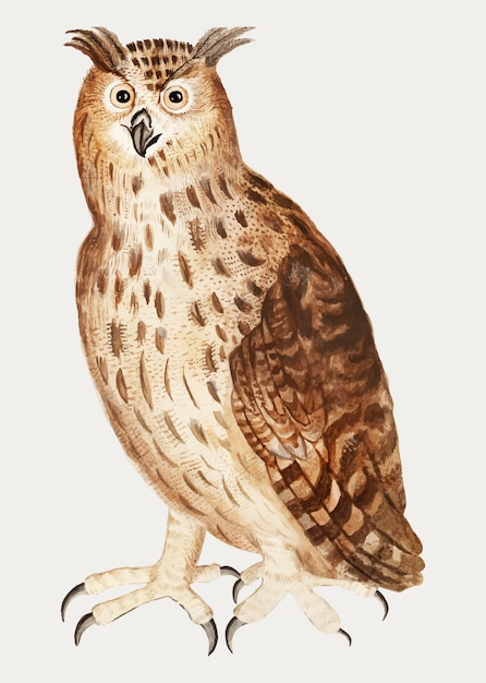 Eagle owl in vintage style Free Vector