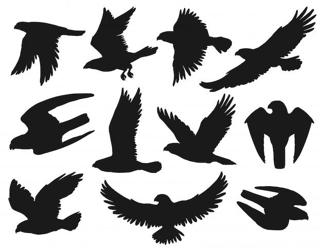 Eagles and hawks black silhouettes,  birds Premium Vector
