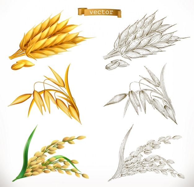 Колосья пшеницы, овса, риса. 3d реализм и гравировка стилей. иллюстрация Premium векторы