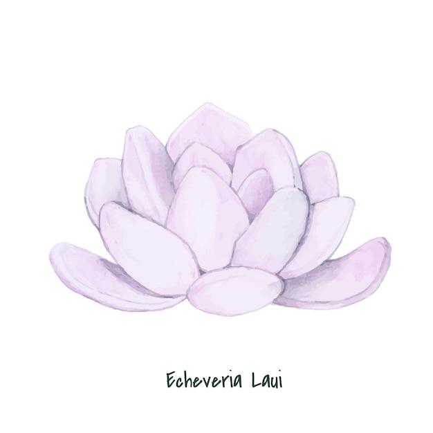 手に引かれたecheveria laui succulent 無料ベクター