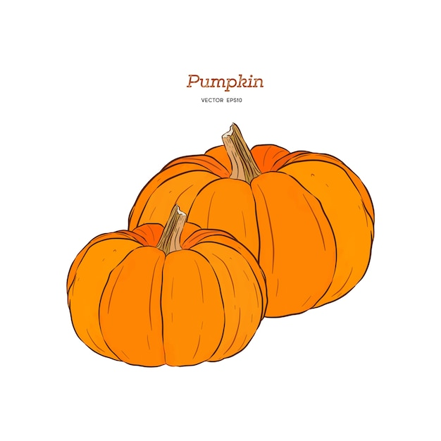 Ector hand drawn set illustration of pumpkin. Premium Vector