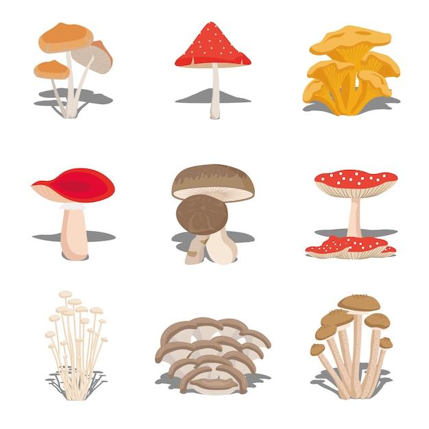 Набор съедобных грибов. иллюстрация разных видов грибов, разных видов съедобных грибов. плоский стиль Premium векторы