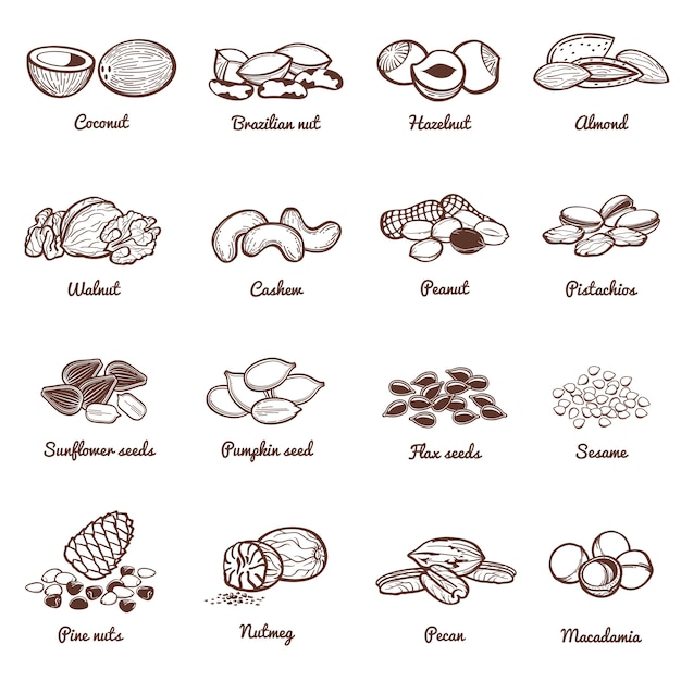 Edible nuts and seeds vector icons. protein healthy food set Premium Vector