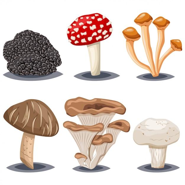 Edible and poisonous mushrooms. champignon, shiitake, honey agarics, oyster, truffle and amanita muscaria. cartoon  set isolated on white background. Premium Vector