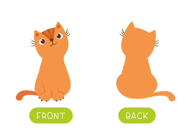 고양이와 교육 반의어 단어 카드 무료 벡터