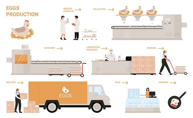 Egg process production in chicken poultry factory infographic illustration.