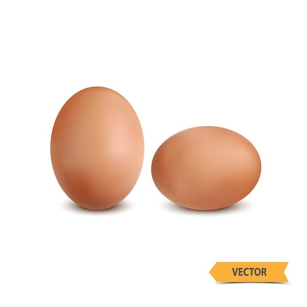 Egg on a white background Premium Vector