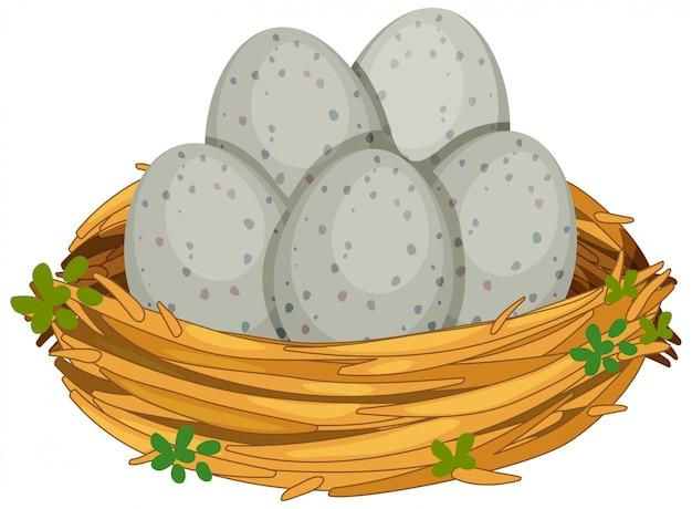分離された鳥の巣の卵 Premiumベクター