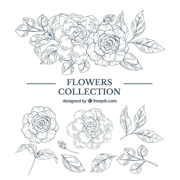 Elegant hand drawn floral element collection Free Vector
