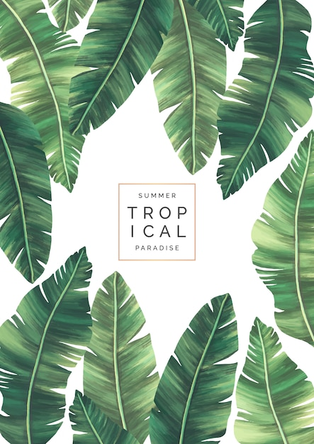 Elegant tropical background with beautiful leaves Free Vector