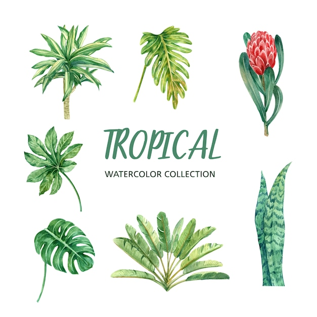 Element watercolor design with tropical plant, illustration set of botanical. Free Vector