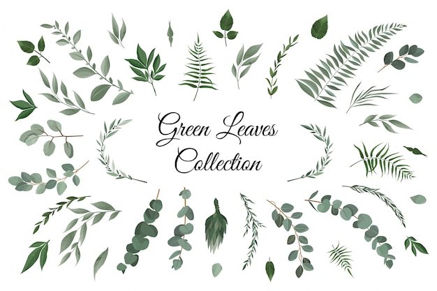 Elements set collection of green leaves Premium Vector