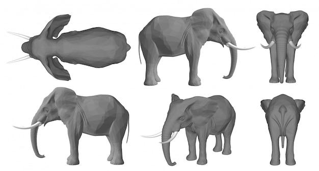 Elephant background 3d Premium Vector