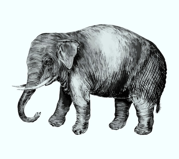 Elephant in vintage style Free Vector