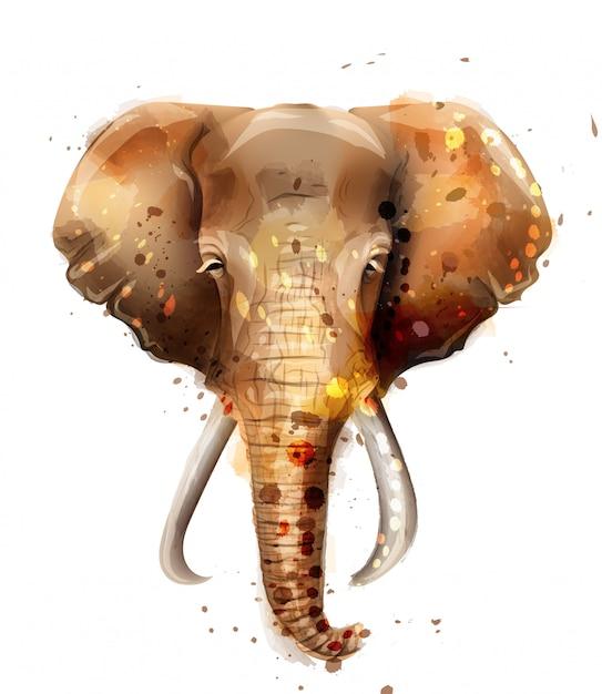 Elephant watercolor Premium Vector