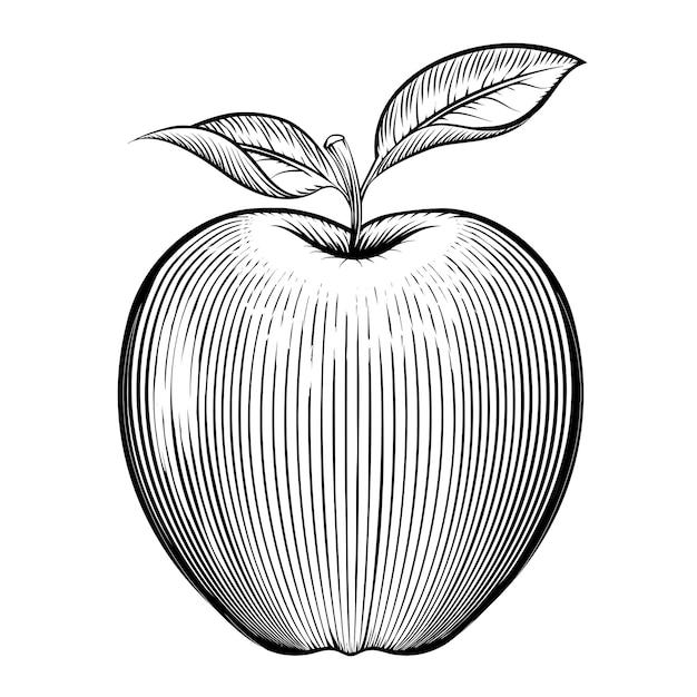 Гравюра на яблоке. вегетарианский и натуральный, листовой и здоровый. Бесплатные векторы