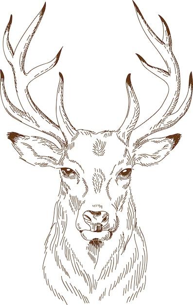 Engraving drawing of deer Premium Vector