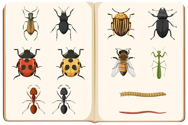 곤충 수집의 곤충학 목록 무료 벡터