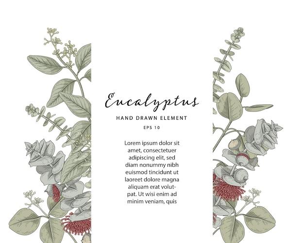 Eucalyptus botanical frame with sample text template Free Vector