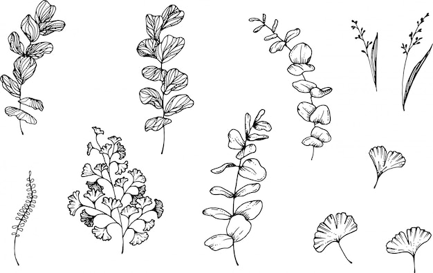 Eucalyptus and herbs hand drawn with ink pen Premium Vector