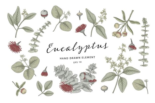 Eucalyptus plant botanical elements hand drawn illustration Premium Vector