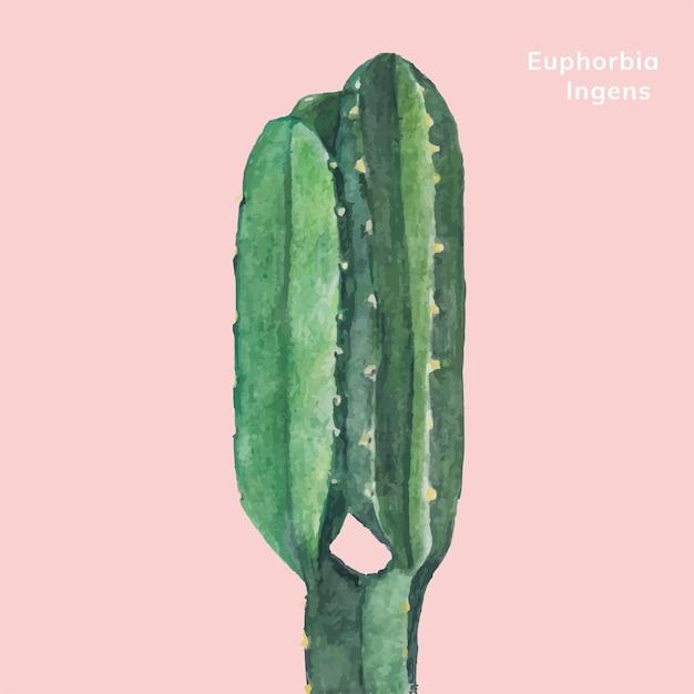 Ручная работа euphorbia ingens candelabra tree Бесплатные векторы