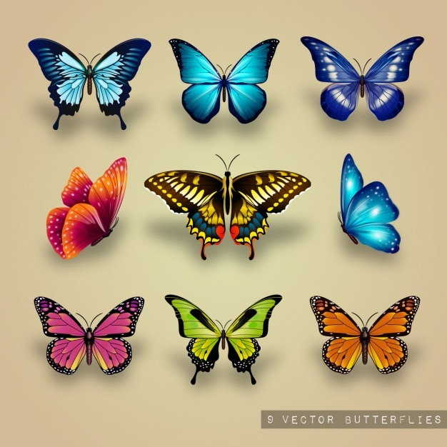 Excellent collection of butterflies Free Vector