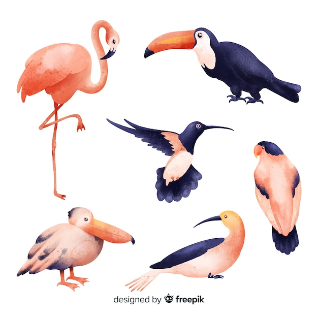 エキゾチックな鳥コレクションの水彩風 無料ベクター