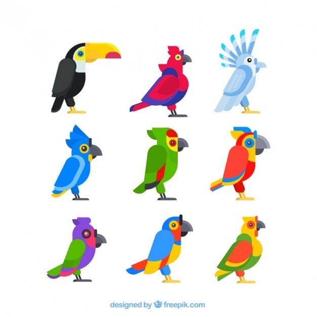 Exotic bird profiles in flat design
